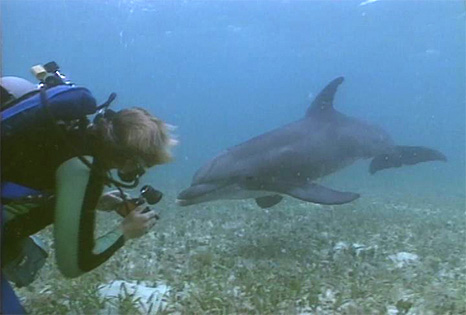 Dolphins, Home to the Sea, the first documentary film by Vision Earth Society
