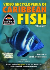 Video Encyclopedia of Caribbean Fish, Volume 1