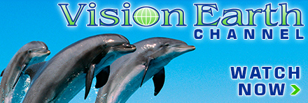 Watch Dolphins Home to the Sea on the Vision Earth Channel